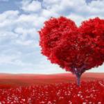 كلام في الحب - اروع الكلمات والجمل للتعبير عن الحب